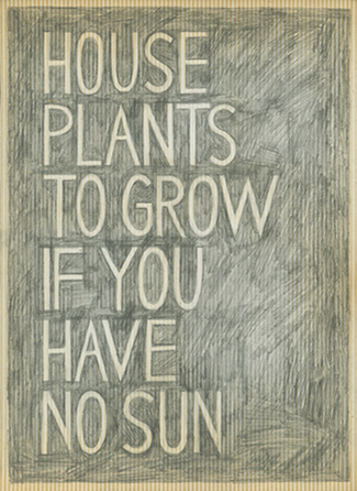 House Plants To Grow If You Have No Sun, Adrienne Garbini